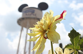 Flower in front of the Earful Tower