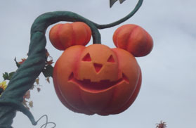 Mickey Pumpkin on a vine