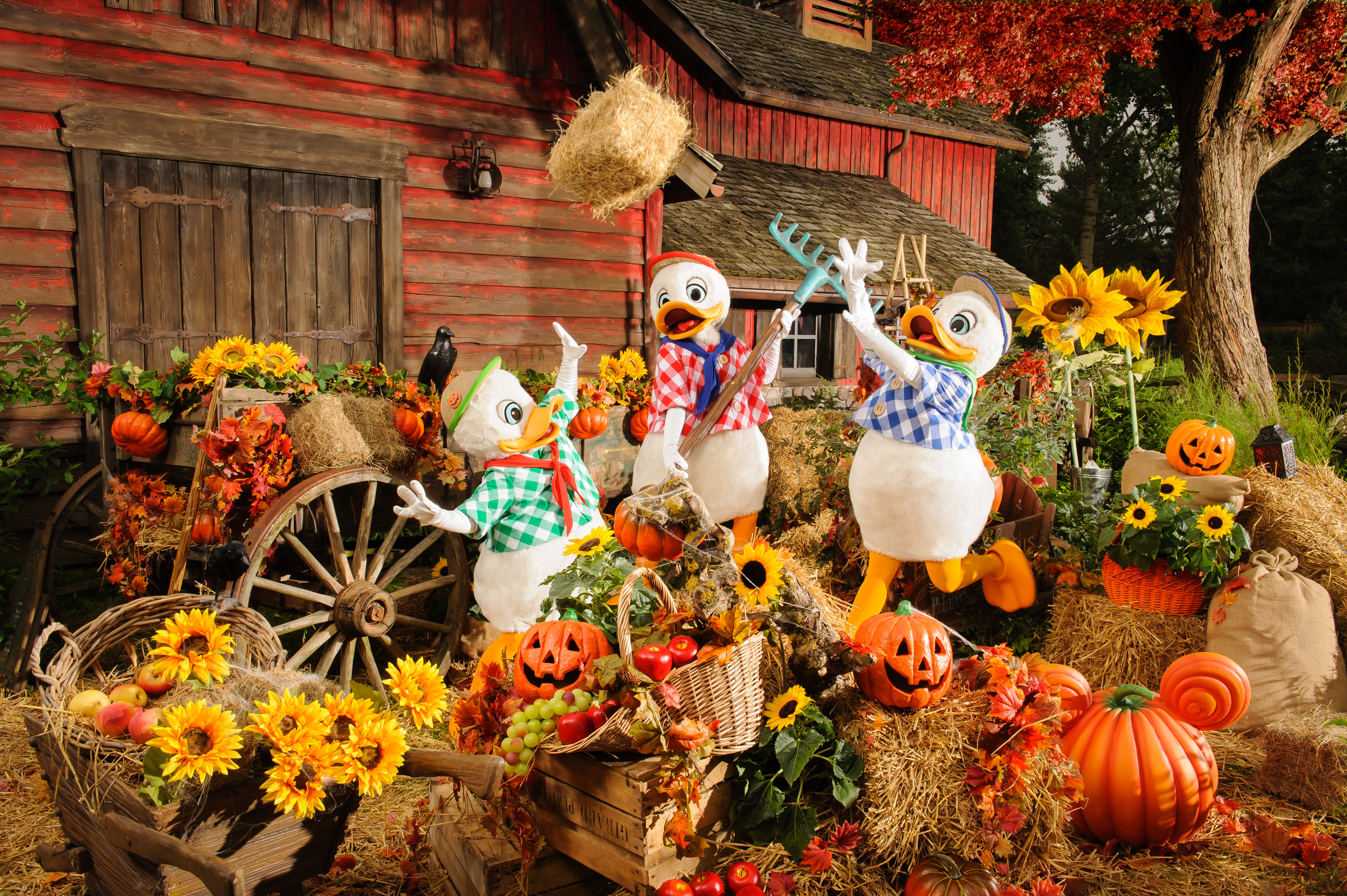 Hewey, Dewey and Louie in a Halloween setting dressed in a harvest attire