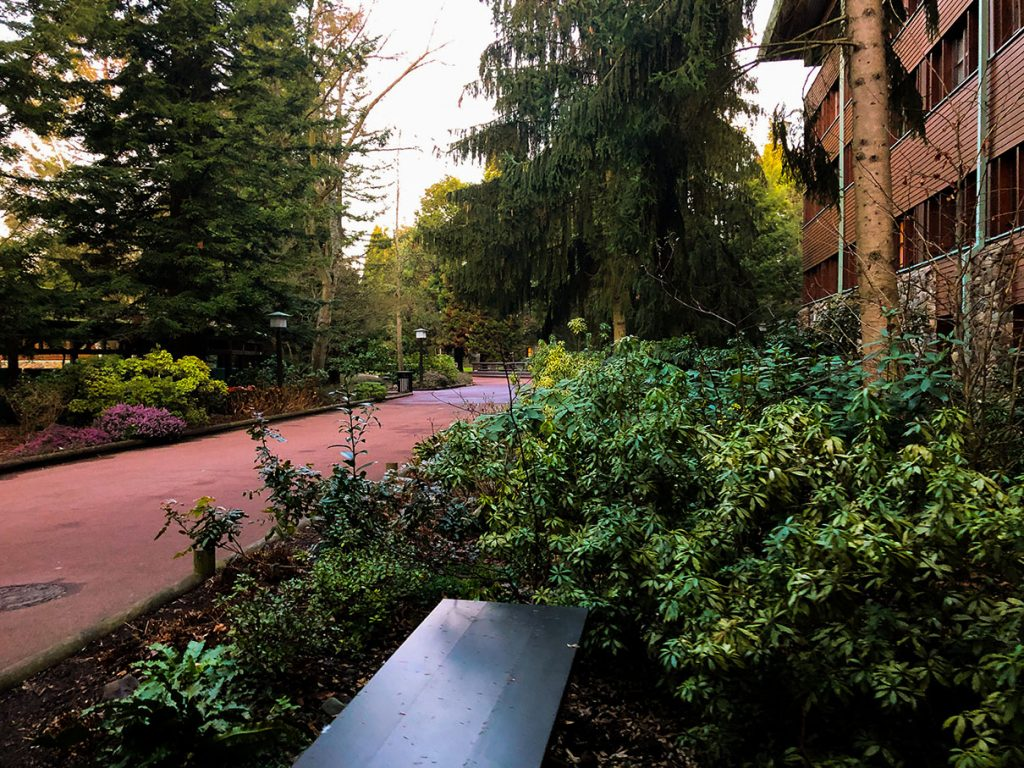 Forest area at Disney's Sequoia Lodge