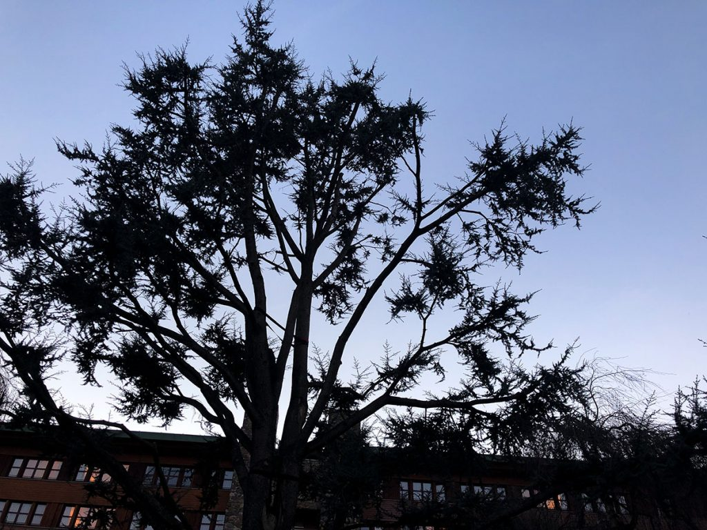 Beautiful trees at Disney's Sequoia Lodge - Disneyland Paris