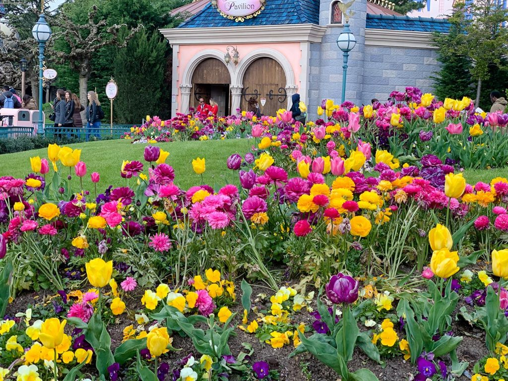 Tulips by the Princess Pavilion