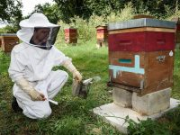 Beekeepers at Disney's Davy Crockett Ranch - Disneyland Paris